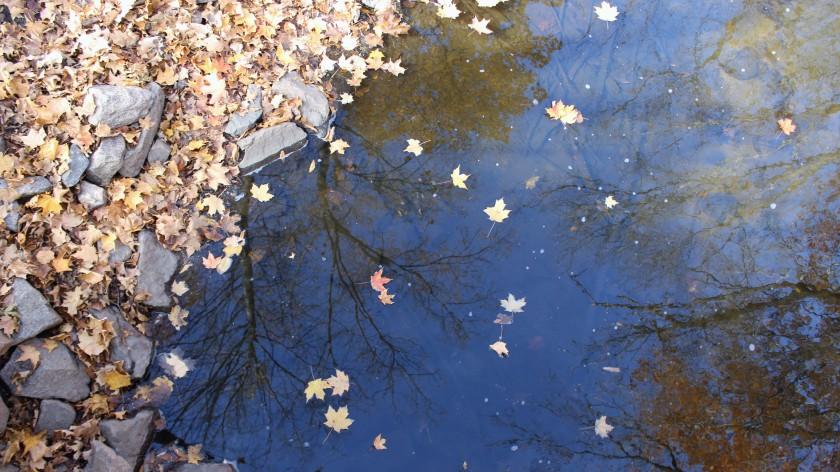 autumn-walk-10-21-16-22